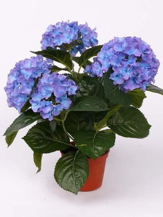 Купить цветы гартензии букеты на свадьбу составление фото
